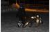 Albedo 100 Reflective Spray Horse&Pets 200 ml